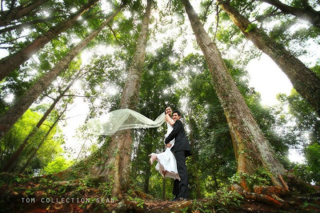 prewedding image in the forest