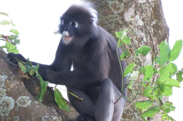 monkey at resort