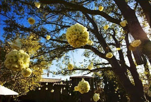 poms on trees