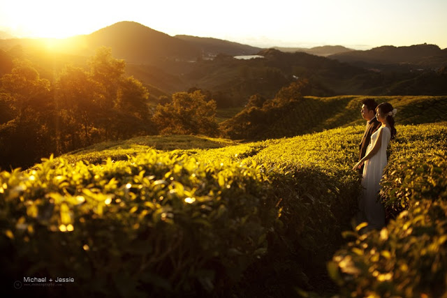 smells of tea leaves