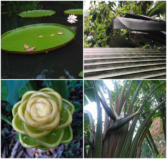giant water lily ginger flower wedding tropical spice garden penang
