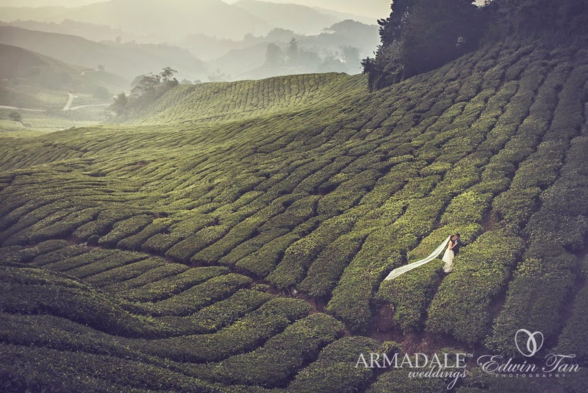 big piece of tea trees never ending