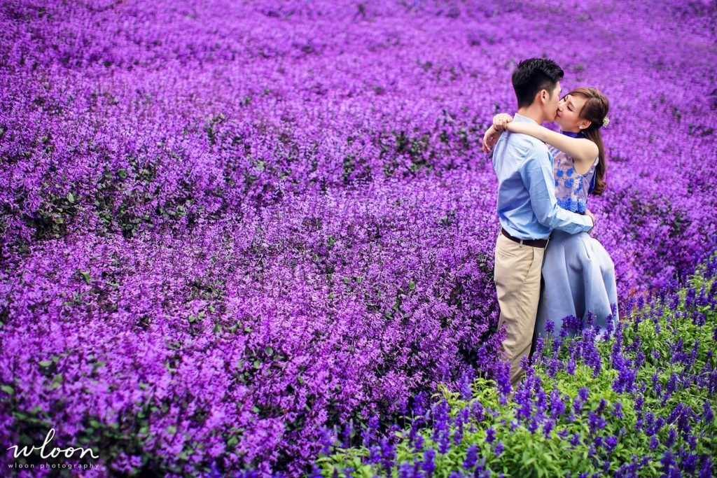 Cameron Lavender Farm pre wedding photography